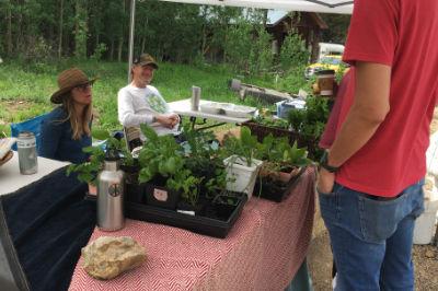 Distributing plant starts at a local fleamarket