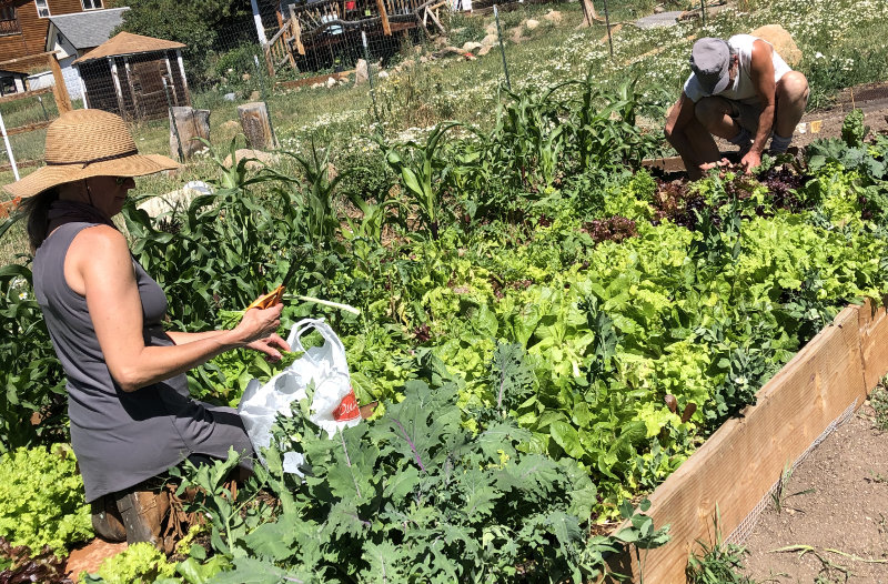 know where your food comes from - Organic Farming