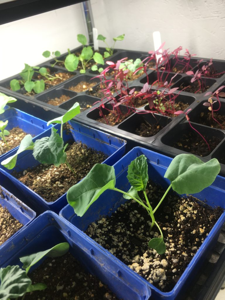 up-potted starts for Chinook West gardens at TEENS, Inc